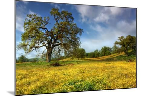 Spring at Shell Creek-Vincent James-Mounted Photographic Print