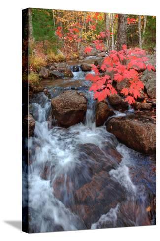 Autumn Stream Through Acadia-Vincent James-Stretched Canvas Print