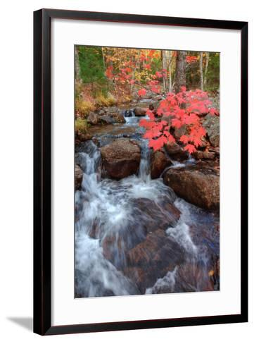 Autumn Stream Through Acadia-Vincent James-Framed Art Print