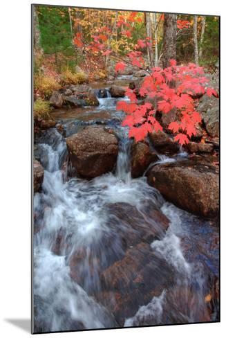 Autumn Stream Through Acadia-Vincent James-Mounted Photographic Print