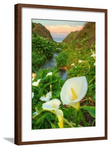 Scene of the Cala Lillies-Vincent James-Framed Art Print