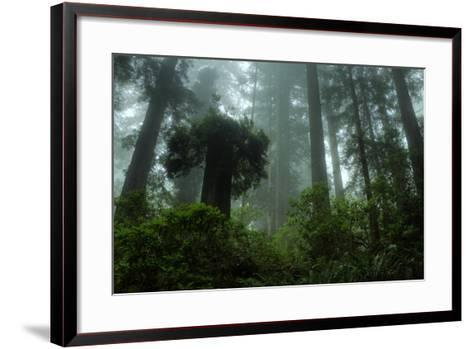 Tall Cool Mist-Vincent James-Framed Art Print