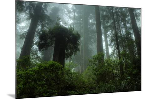 Tall Cool Mist-Vincent James-Mounted Photographic Print