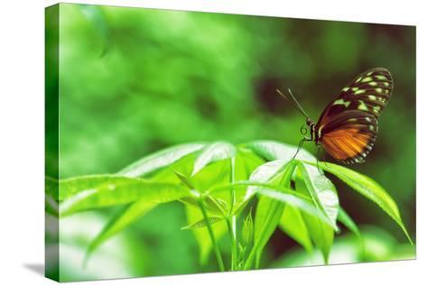 Butterfly Works-Vincent James-Stretched Canvas Print