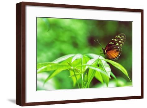 Butterfly Works-Vincent James-Framed Art Print