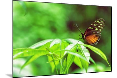 Butterfly Works-Vincent James-Mounted Photographic Print