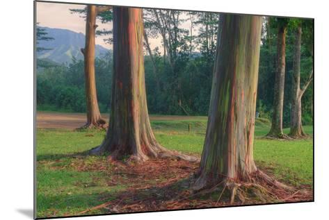 Scene of Rainbow Eucalyptus-Vincent James-Mounted Photographic Print
