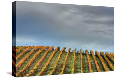 Sky and Vine-Vincent James-Stretched Canvas Print