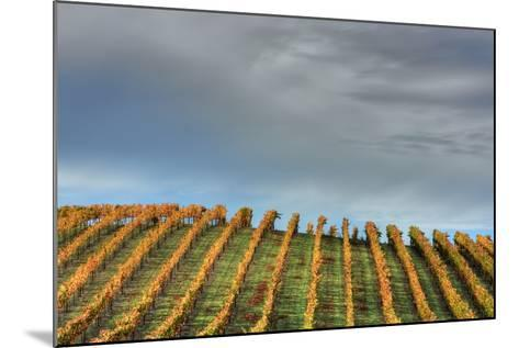 Sky and Vine-Vincent James-Mounted Photographic Print