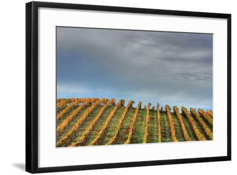 Sky and Vine-Vincent James-Framed Art Print