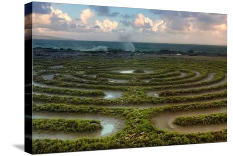 Scene at Kapalua Labyrinth Maui-Vincent James-Stretched Canvas Print