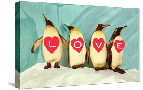 Penguins Spelling Out Love--Stretched Canvas Print