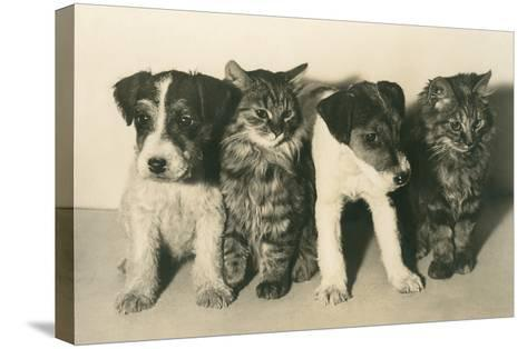 Puppies and Kittens--Stretched Canvas Print