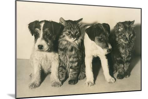 Puppies and Kittens--Mounted Art Print