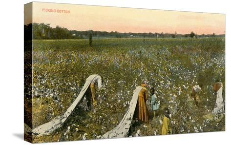 Picking Cotton--Stretched Canvas Print