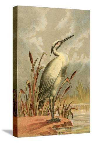 Heron with Cattails--Stretched Canvas Print
