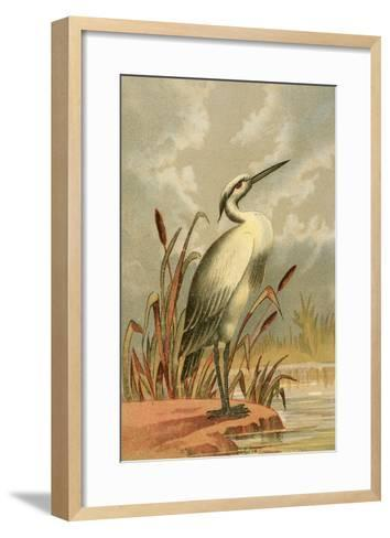 Heron with Cattails--Framed Art Print