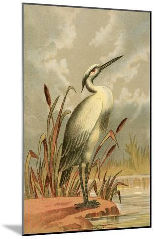 Heron with Cattails--Mounted Art Print