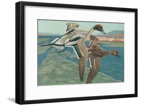 American Pintail Ducks--Framed Art Print