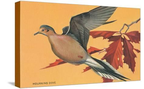 Mourning Dove--Stretched Canvas Print