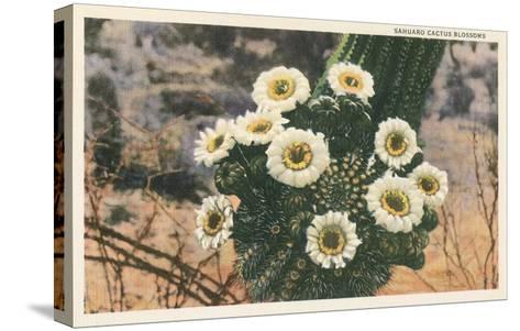 Saguaro Cactus Blossoms--Stretched Canvas Print