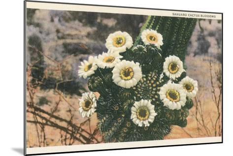 Saguaro Cactus Blossoms--Mounted Art Print