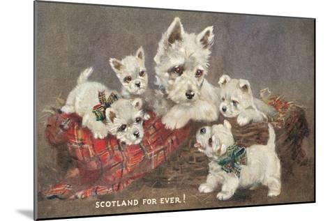 Scotland Forever, Westies--Mounted Art Print