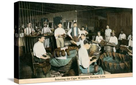 Cigar Wrappers, Havana, Cuba--Stretched Canvas Print