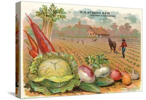 Vegetables, Old Fashioned Farm--Stretched Canvas Print
