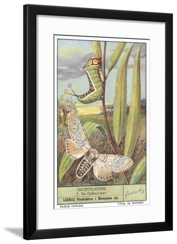 Moth and Caterpillar--Framed Art Print