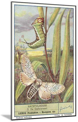 Moth and Caterpillar--Mounted Art Print