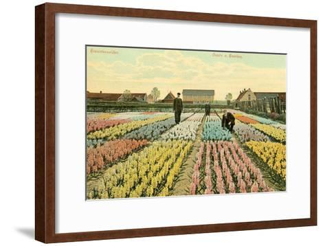 Hyacinth Garden, Haarlem, Holland--Framed Art Print
