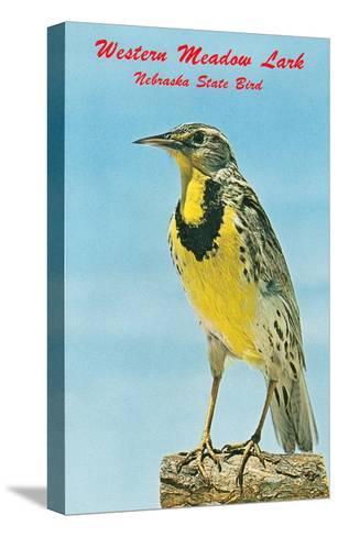 Western Meadowlark--Stretched Canvas Print