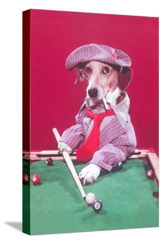 Dog Pool Shark--Stretched Canvas Print