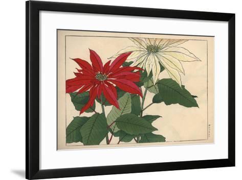 Crimson and White Poinsettia--Framed Art Print