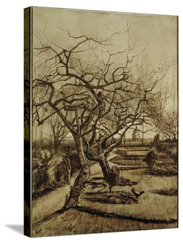 Parsonage Garden in Nuenen, March 1884-Vincent van Gogh-Stretched Canvas Print
