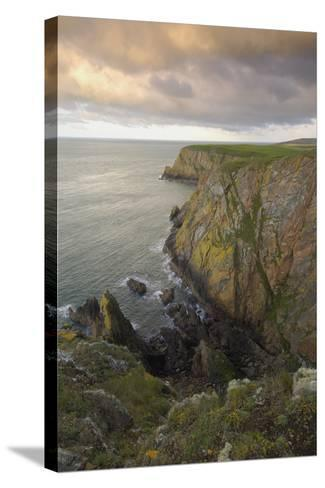Mull of Galloway, Rhins of Galloway, Dumfries and Galloway, Scotland, UK-Gary Cook-Stretched Canvas Print