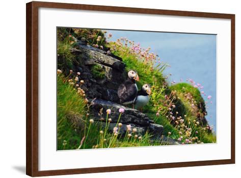 Two Puffins, Westray, Orkney Islands, Scotland, United Kingdom, Europe-Bhaskar Krishnamurthy-Framed Art Print