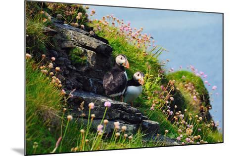Two Puffins, Westray, Orkney Islands, Scotland, United Kingdom, Europe-Bhaskar Krishnamurthy-Mounted Photographic Print