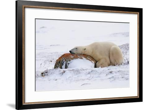 Polar Bear Resting, Churchill, Hudson Bay, Manitoba, Canada, North America-Bhaskar Krishnamurthy-Framed Art Print