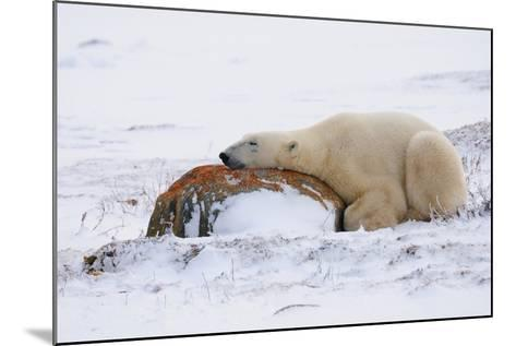 Polar Bear Resting, Churchill, Hudson Bay, Manitoba, Canada, North America-Bhaskar Krishnamurthy-Mounted Photographic Print