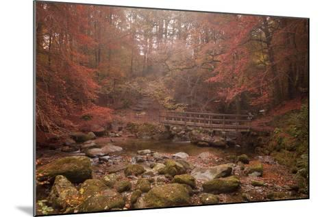 Misty Autumn Valley Near Ambleside, Lake District National Park, Cumbria, England, United Kingdom-Ian Egner-Mounted Photographic Print