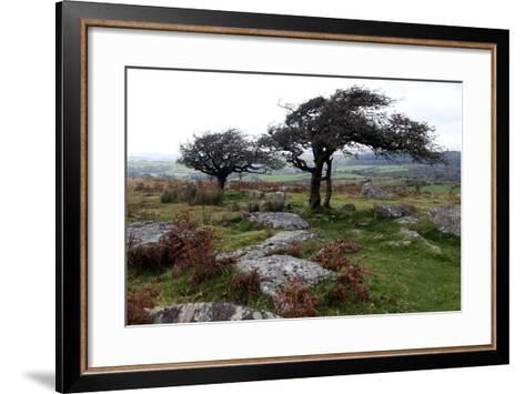 Two Windswept Trees, Near Hexworthy, Dartmoor, Devon, England, United Kingdom, Europe-David Lomax-Framed Art Print