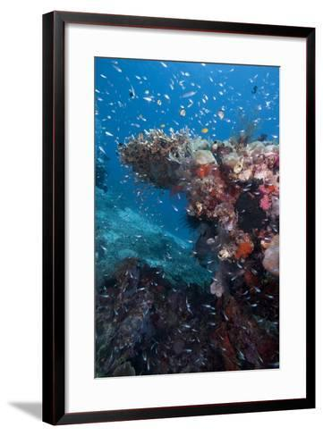 Reef Scene, Komodo, Indonesia, Southeast Asia, Asia-Lisa Collins-Framed Art Print