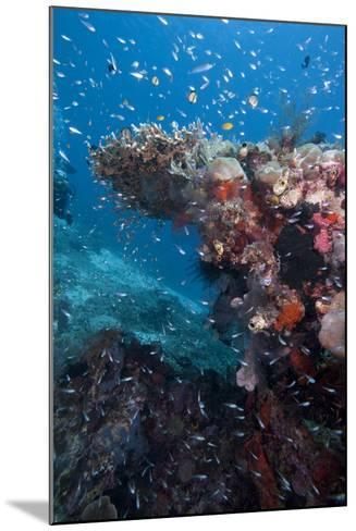 Reef Scene, Komodo, Indonesia, Southeast Asia, Asia-Lisa Collins-Mounted Photographic Print