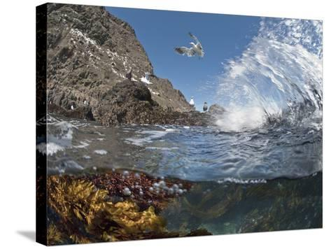 Underwater Photo of Anacapa Arch, Kelp and Birds, Channel Islands National Park, California, USA-Antonio Busiello-Stretched Canvas Print