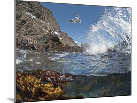 Underwater Photo of Anacapa Arch, Kelp and Birds, Channel Islands National Park, California, USA-Antonio Busiello-Mounted Photographic Print