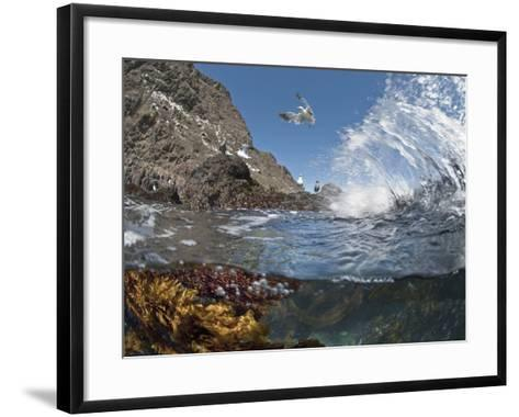 Underwater Photo of Anacapa Arch, Kelp and Birds, Channel Islands National Park, California, USA-Antonio Busiello-Framed Art Print