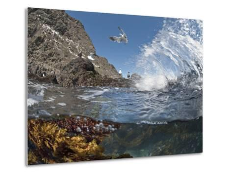 Underwater Photo of Anacapa Arch, Kelp and Birds, Channel Islands National Park, California, USA-Antonio Busiello-Metal Print