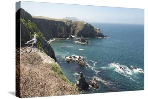 Gull Looking over the Ocean, Anacapa, Channel Islands National Park, California, USA-Antonio Busiello-Stretched Canvas Print